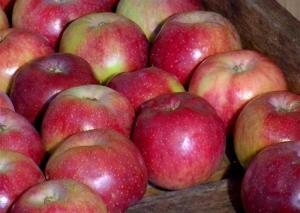 conserver-pommes-2-l750-h534-c